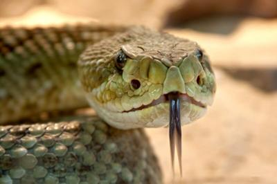 63rd Rattlesnake Round Up Coming March 12-14