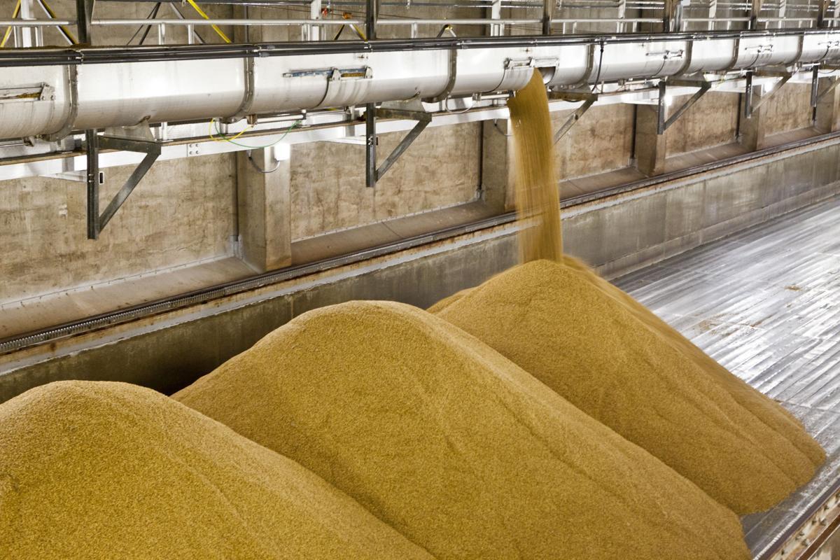 Barley Rahr