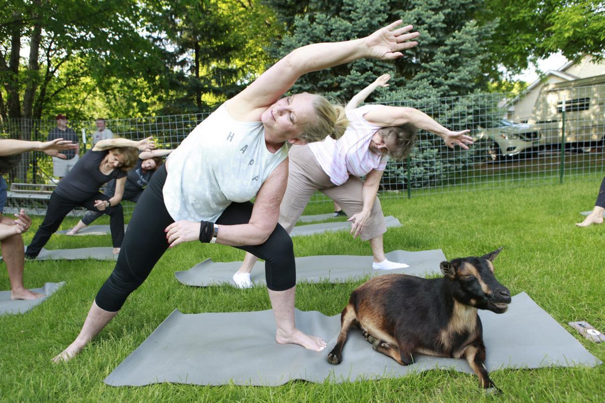 goat yoga 1