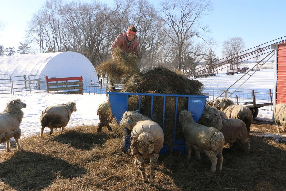 Organically raised, grass-fed sheep