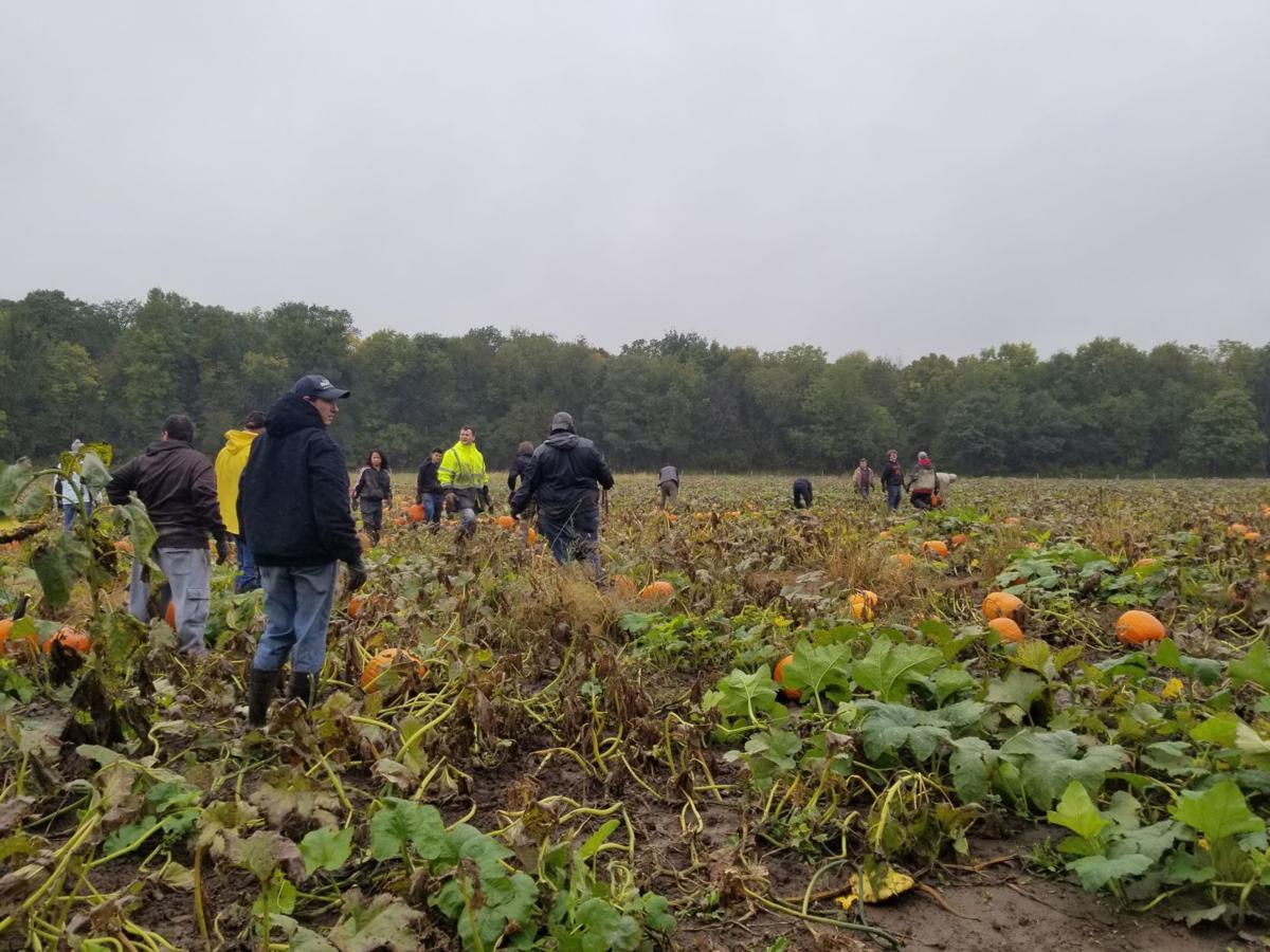Jordan robotics picks pumpkins