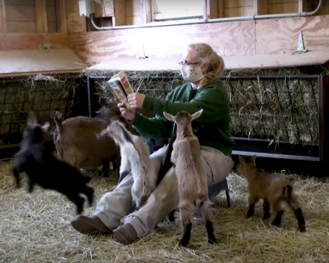 Goat story time