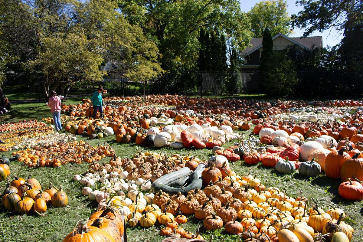 Fall harvest at the Arb