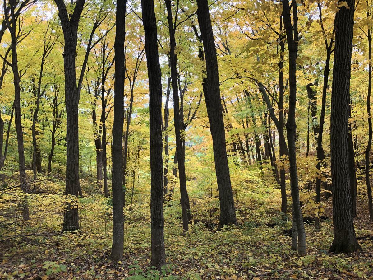 Minnesota Landscape Arborteum fall 2019