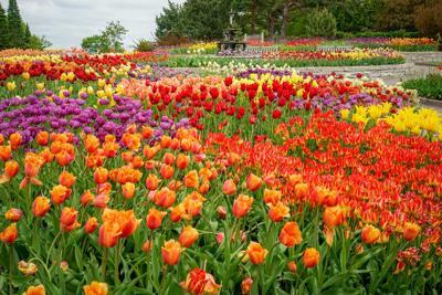 Minnesota Landscape Arboretum Voted Best Botanical Garden Once