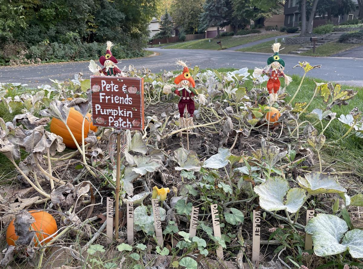 Pete & Friends Pumpkin Patch