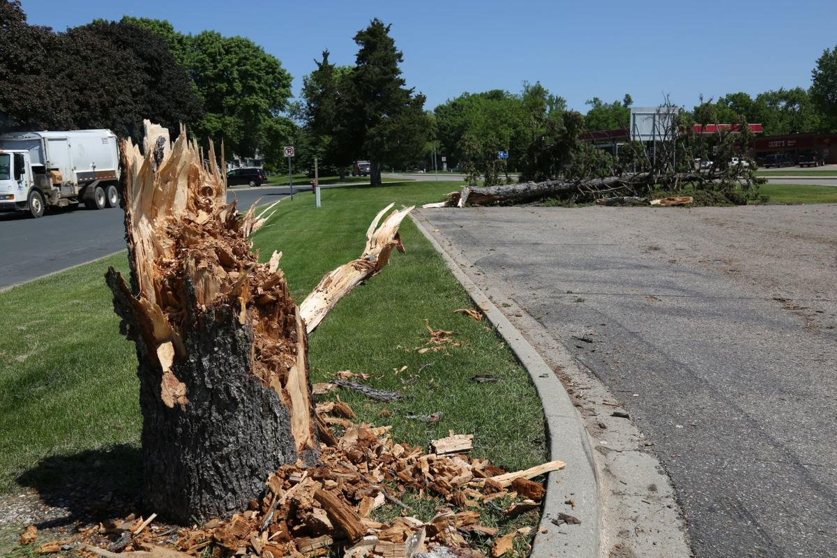 Tree in New Prague damaged due to high winds
