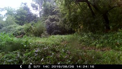 Trail Cam Photo cougar