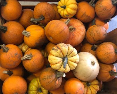 Pumpkins at Autumn Fare (copy)