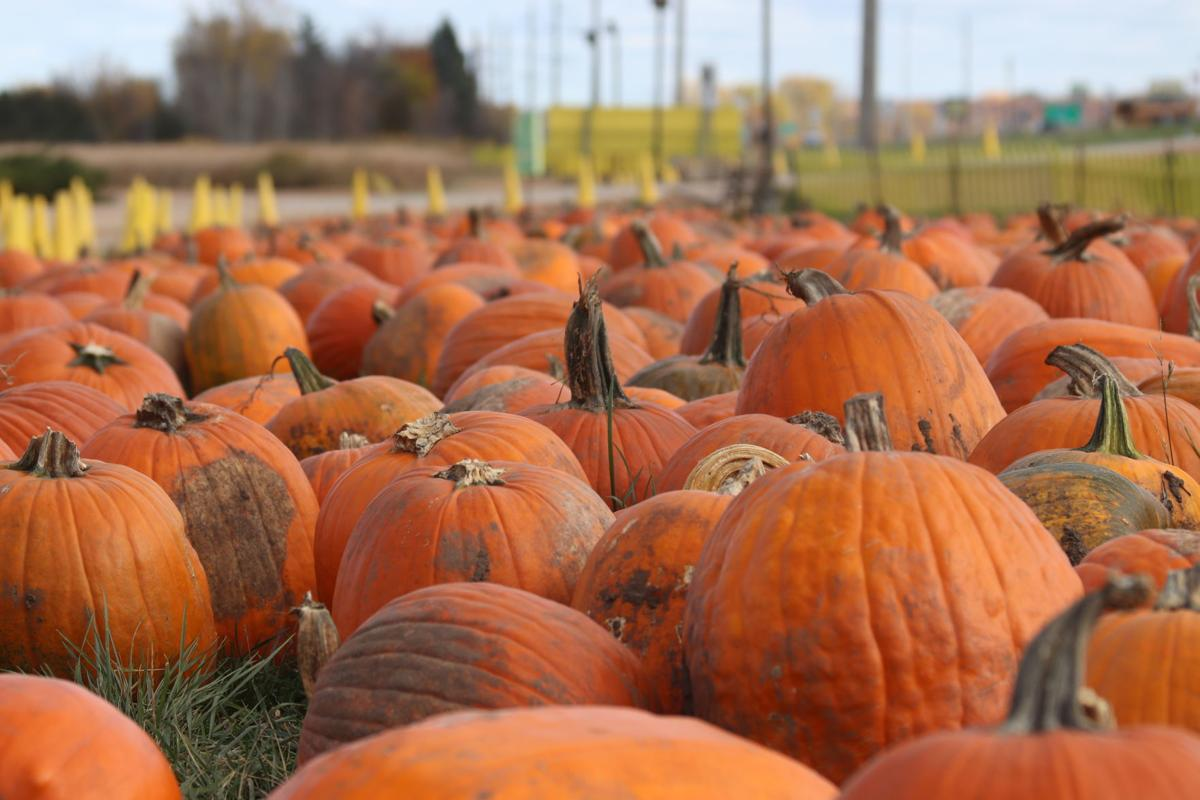 Pumpkins at Minnesota's Largest Candy Store