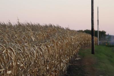 Jordan cornfield