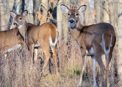 Deer Hunting (copy)