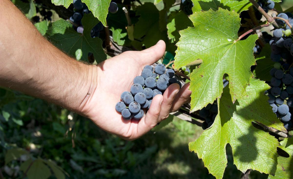 Schram Winery