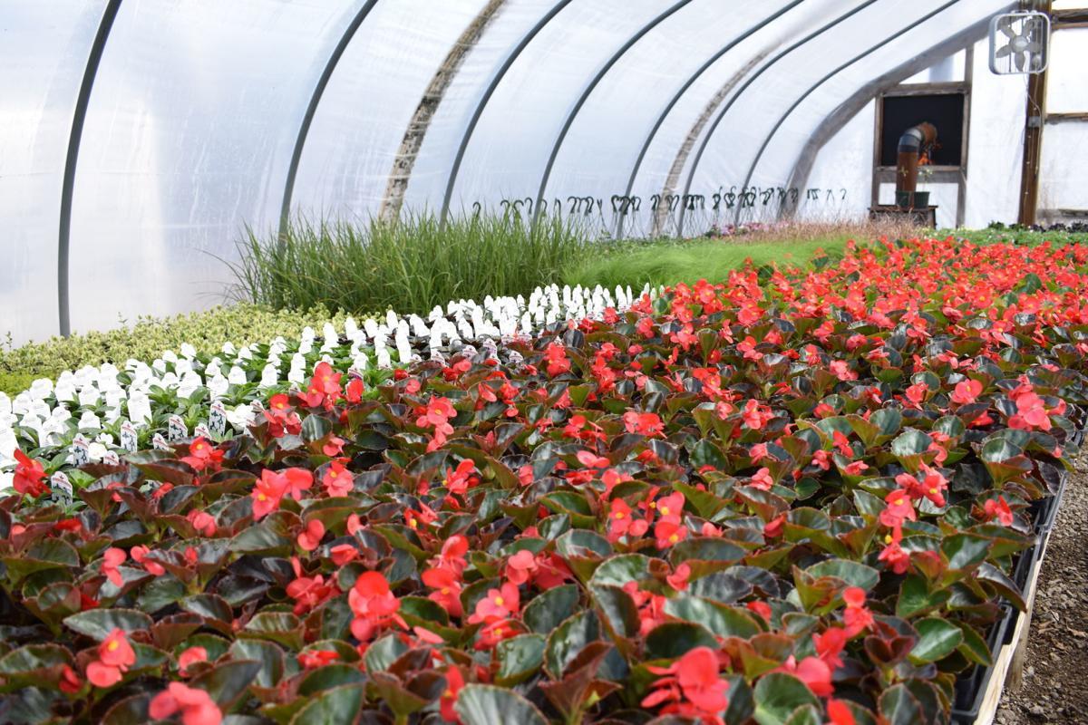 Picha plant sale 5