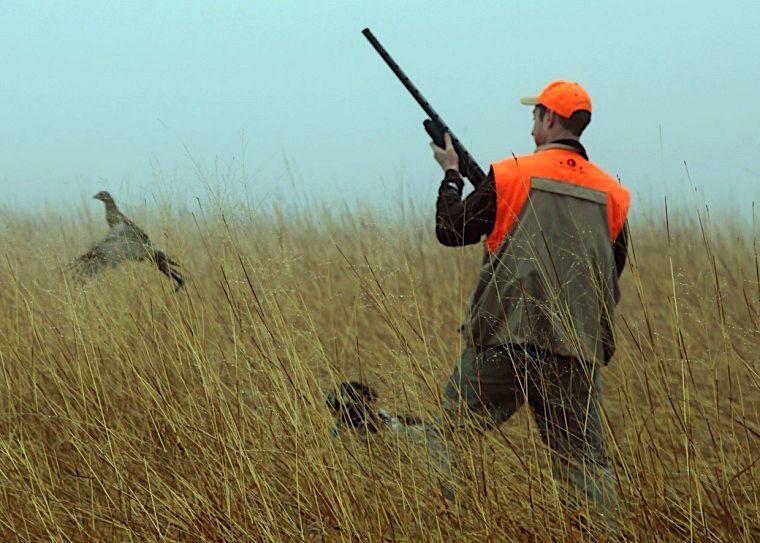 Minnesota Pheasants
