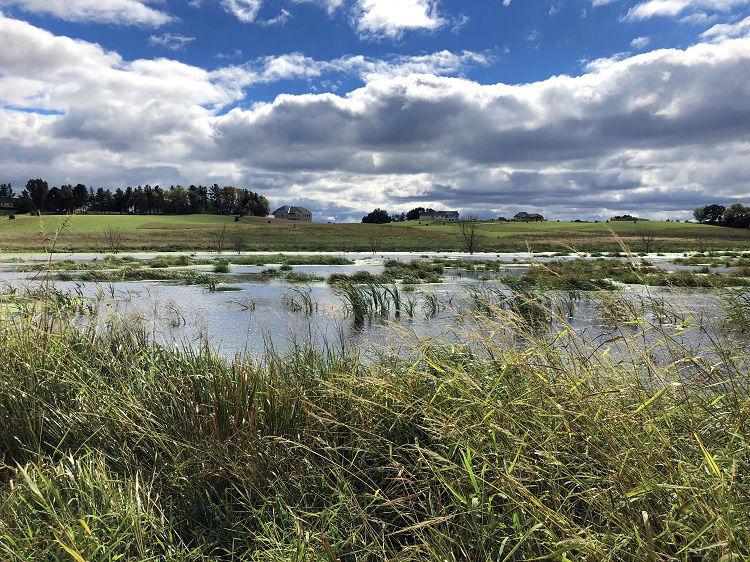 Mader wetland restoration in Minnetrista