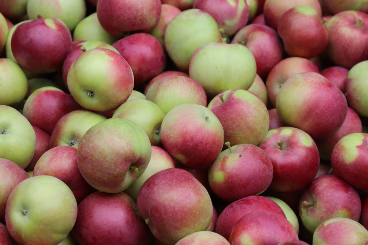 Minnesota Harvest Apples