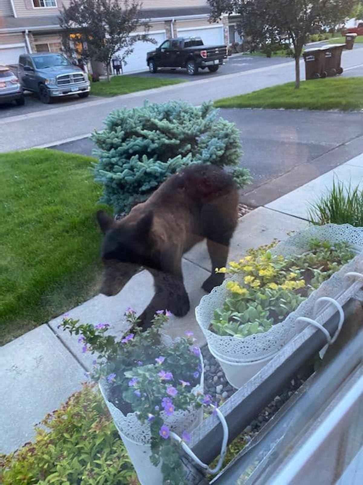 Bear on sidewalk