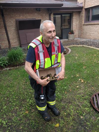 Wayzata Fire Department rescues ducklings (copy)