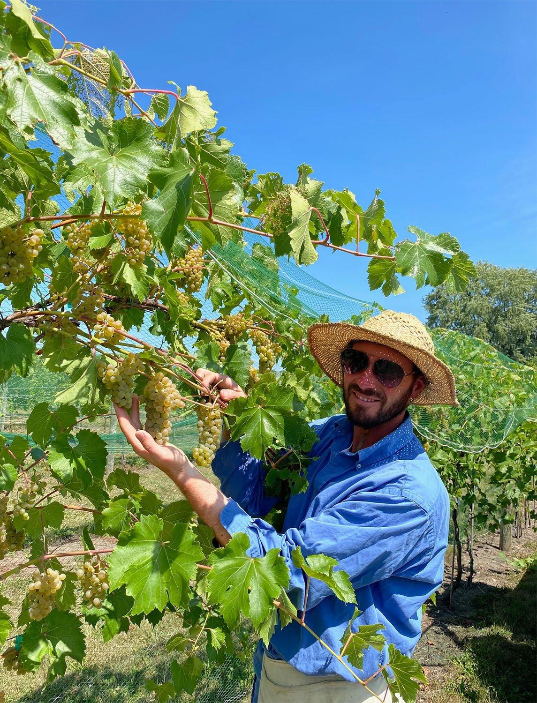 Arboretum winery
