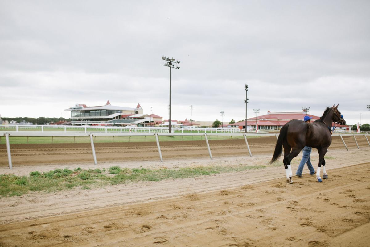 Canterbury Park racehorse walking to ring