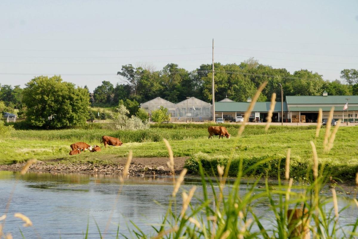 Loftus farm
