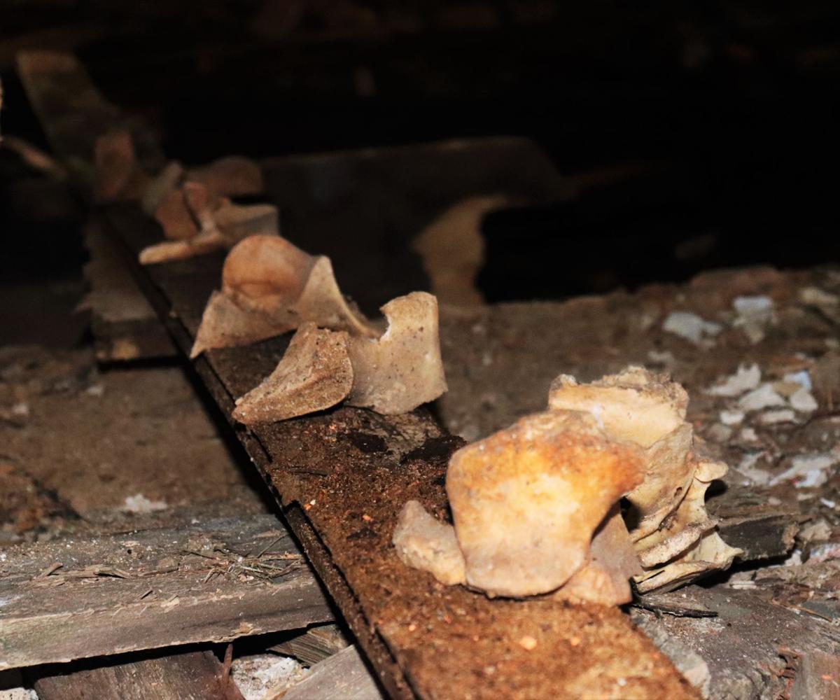Bones found in Jordan