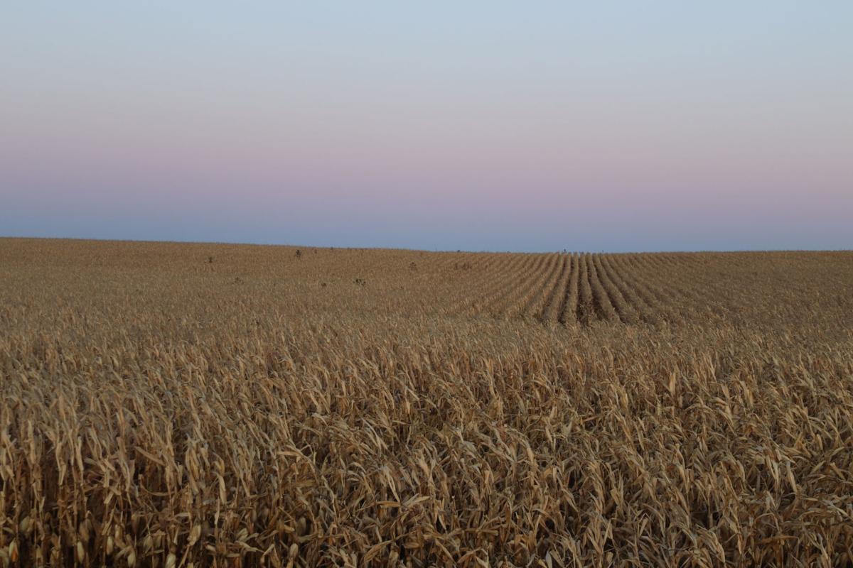 Jordan cornfield sunset (wide)
