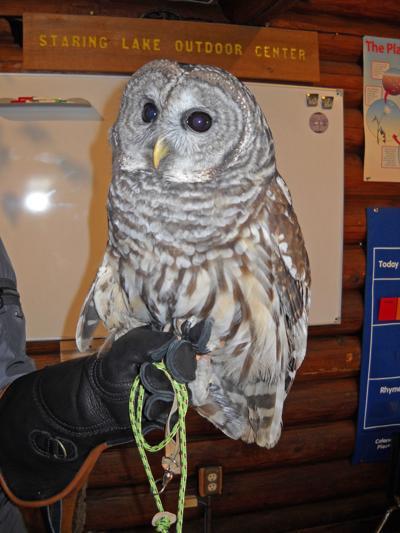 Outdoor Center owl