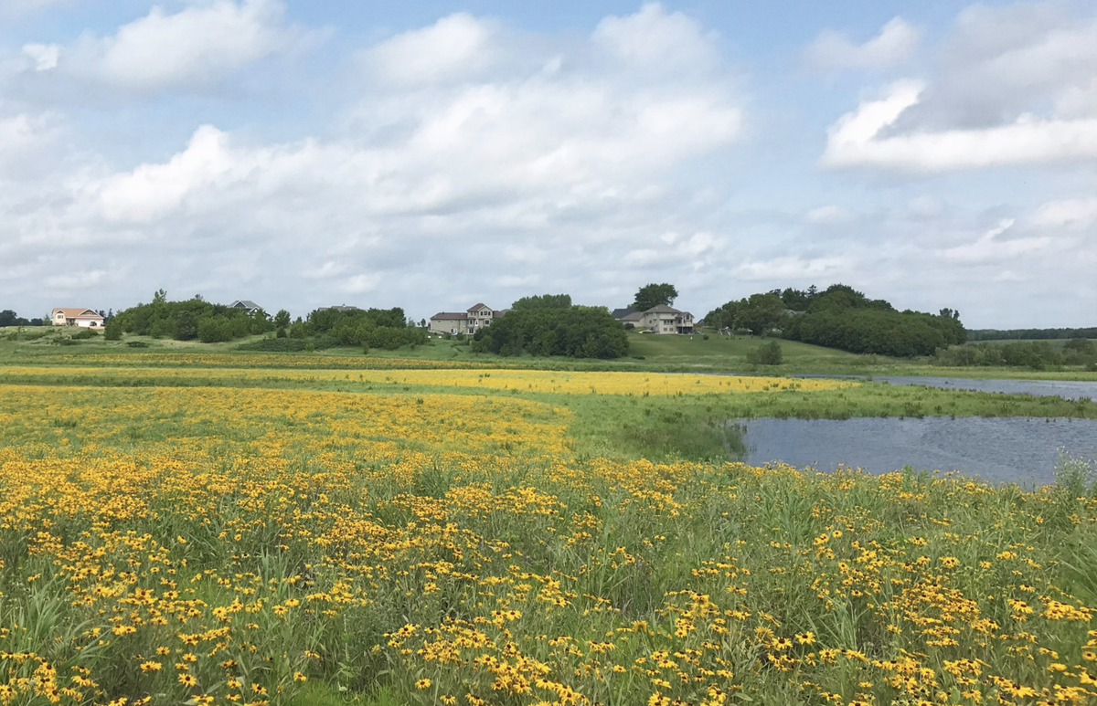 Restored wetland — Helena Township