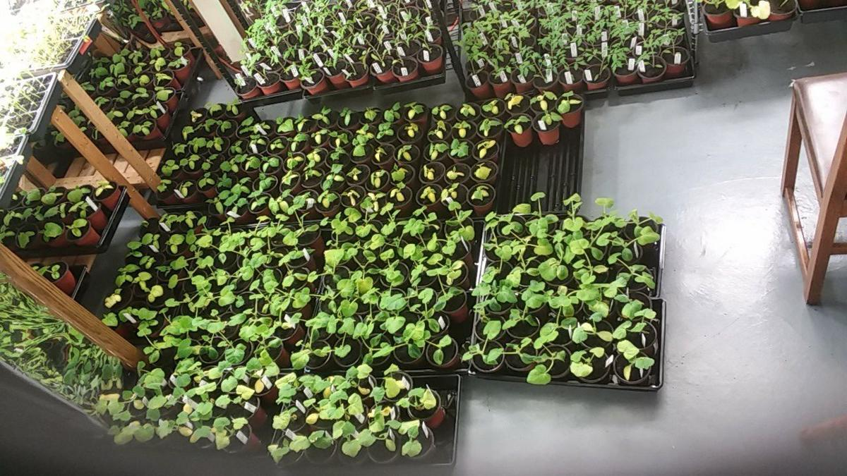 Herbs vegetables garden plants