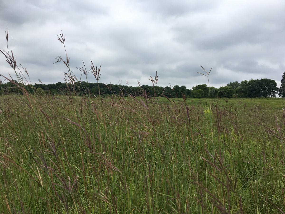 Upland preservation