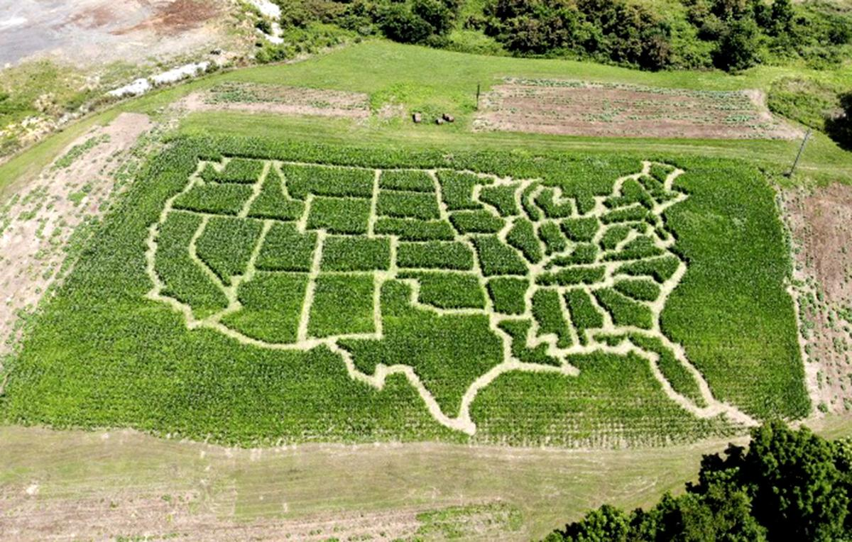 Lee Highway Farms Corn Maze