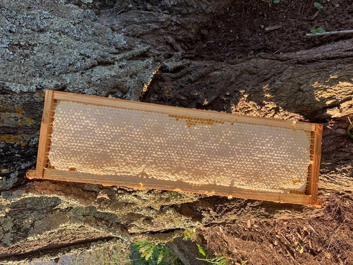 Abingdon Bee Co.
