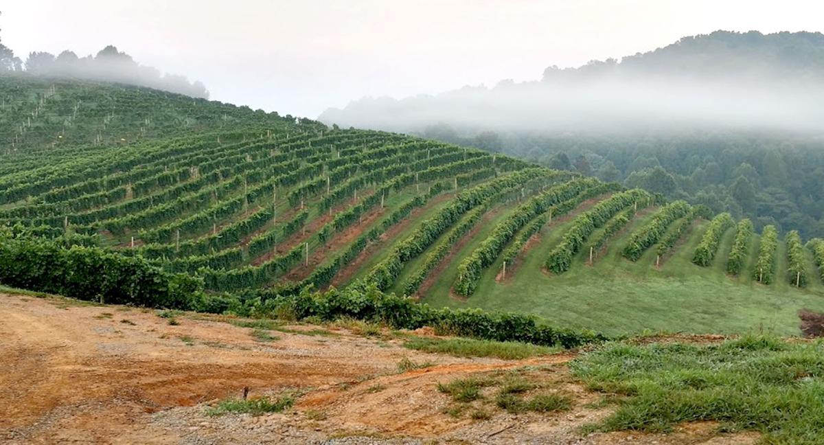Abingdon Vineyards 07