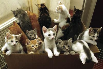 Kittens at Elmore County animal shelter