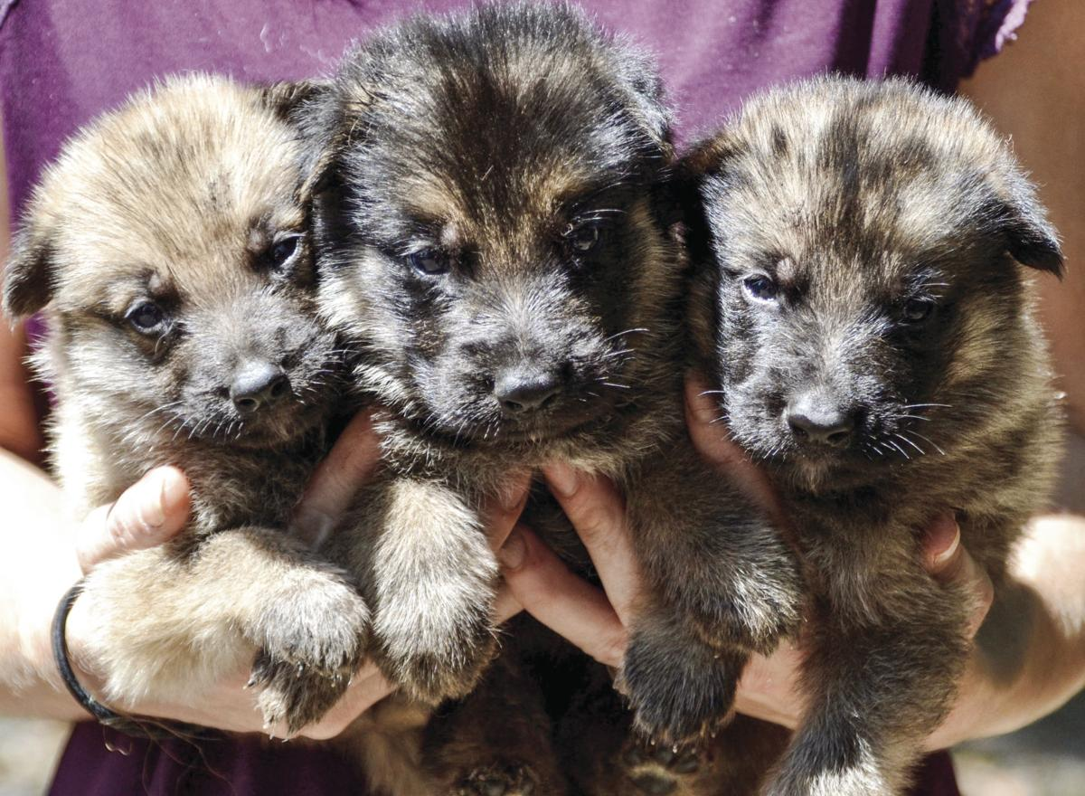 0904 PUPPIES WITH PURPOSE2.jpg