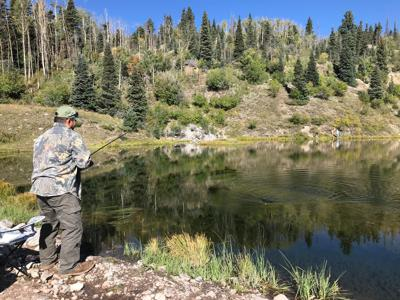 Opinion: Get involved, make your voice heard regarding Carson National Forest plan