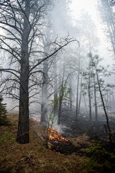 Forest Service to burn 700 acres near Taos Pines, Palo Flechado Pass