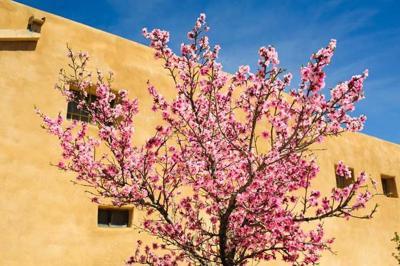 'Taos Community Tree Care Project' underway