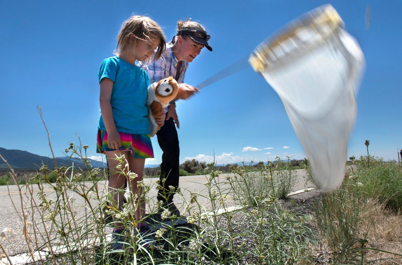 Hunting for wild bees to understand the drought