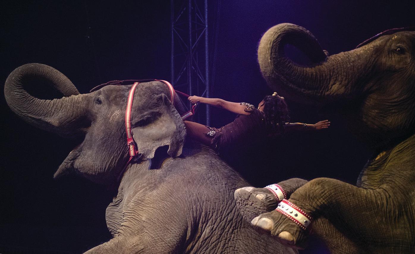 Big animals under the Big Top