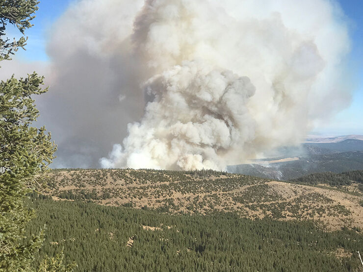 Luna fire growth slows, cause still unknown