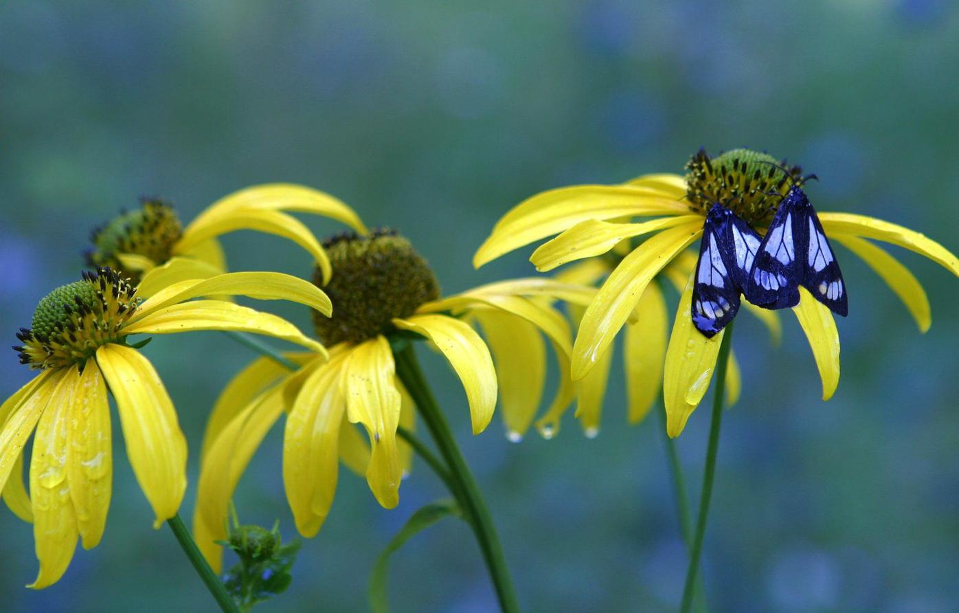 'Snap That Plant' contest produces winning photos