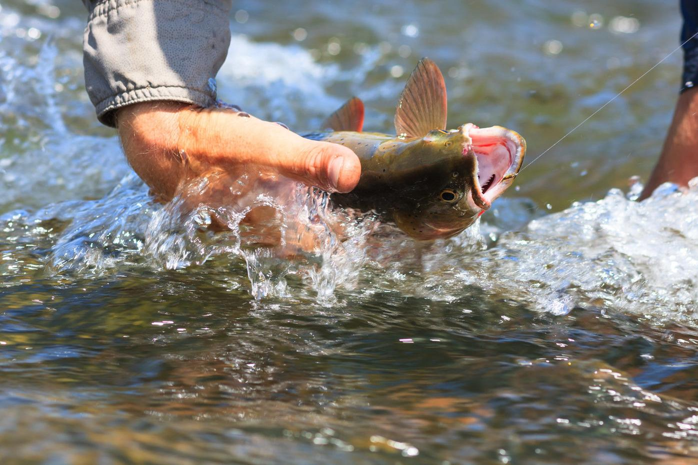 Voluntary fishing restrictions will help fish make it through a tough year