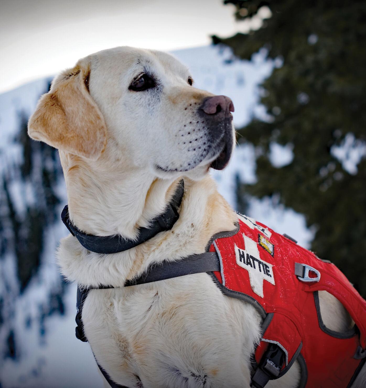 avalanche-dogs-02.jpg
