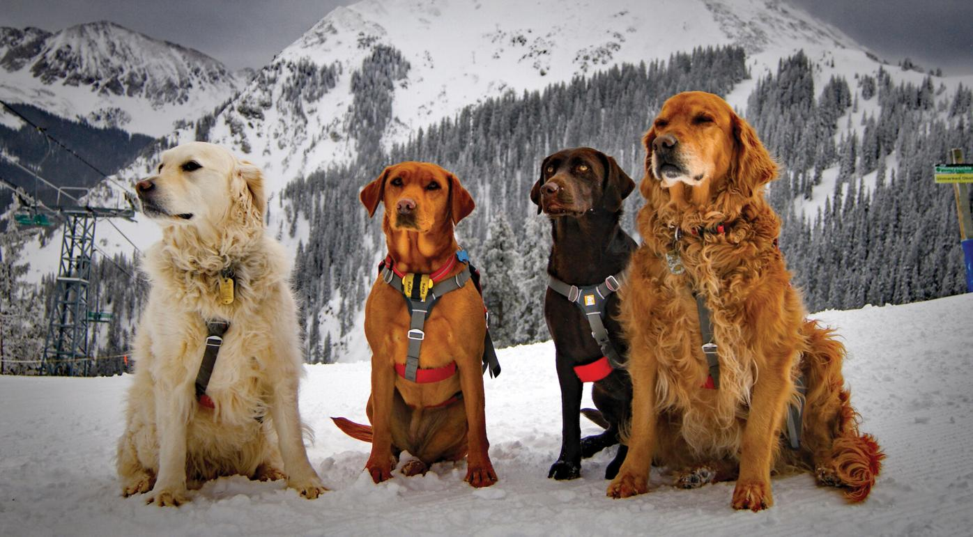 avalanche-dogs.jpg