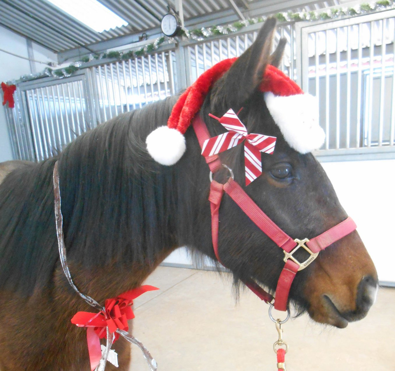 Don T Miss Holiday Horse Party At Ess Columns Taosnews Com