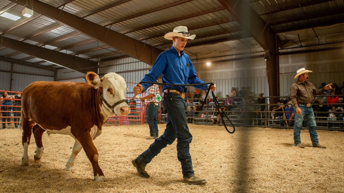 Photo Gallery: 2021 Annual Taos County Fair