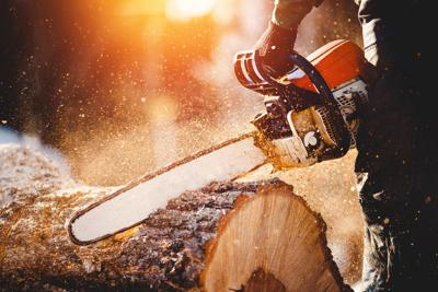 Opinion: Allow woodcutting